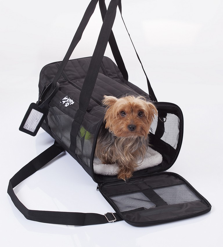 American Airlines Pet Travel
