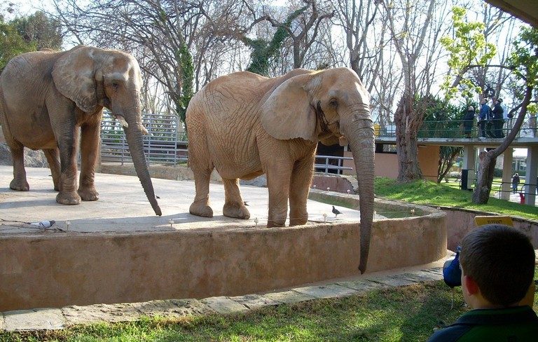 Animal Cruelty In Zoos