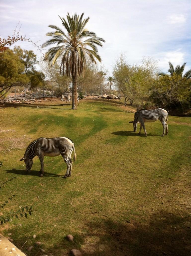 Arizona Zoos