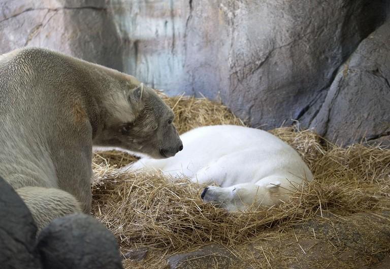 Asheboro Zoo Tickets