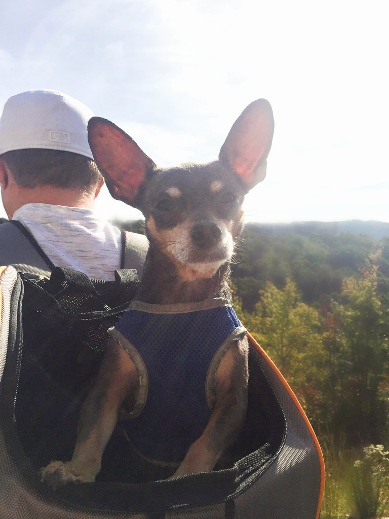 Dog Carrier For Hiking Best Of Hiking With A Small Dog Made Easy