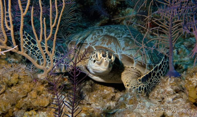 Best Scuba Diving In Caribbean 002