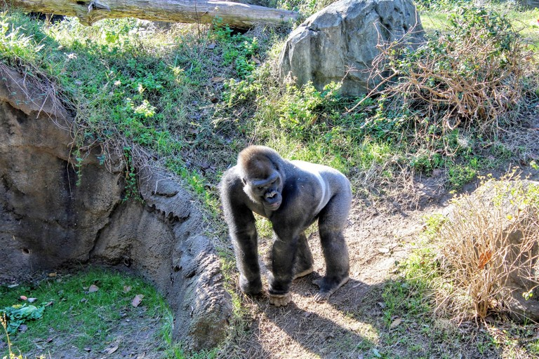 Best Zoos In Usa