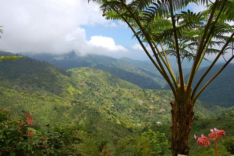 Blue Mountains National Park Jamaica