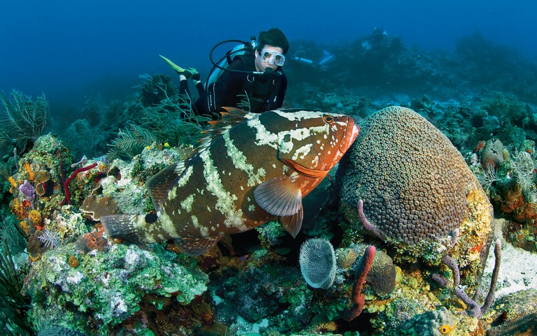 Bonaire Dive Resorts