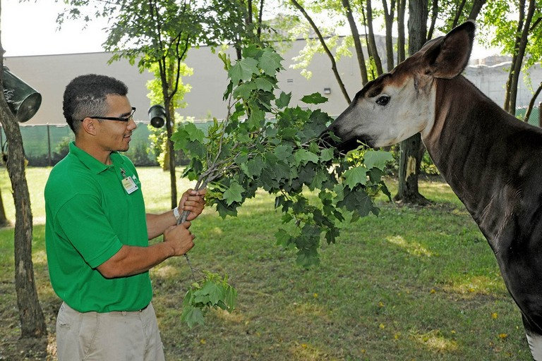 Brookfield Zoo Internship