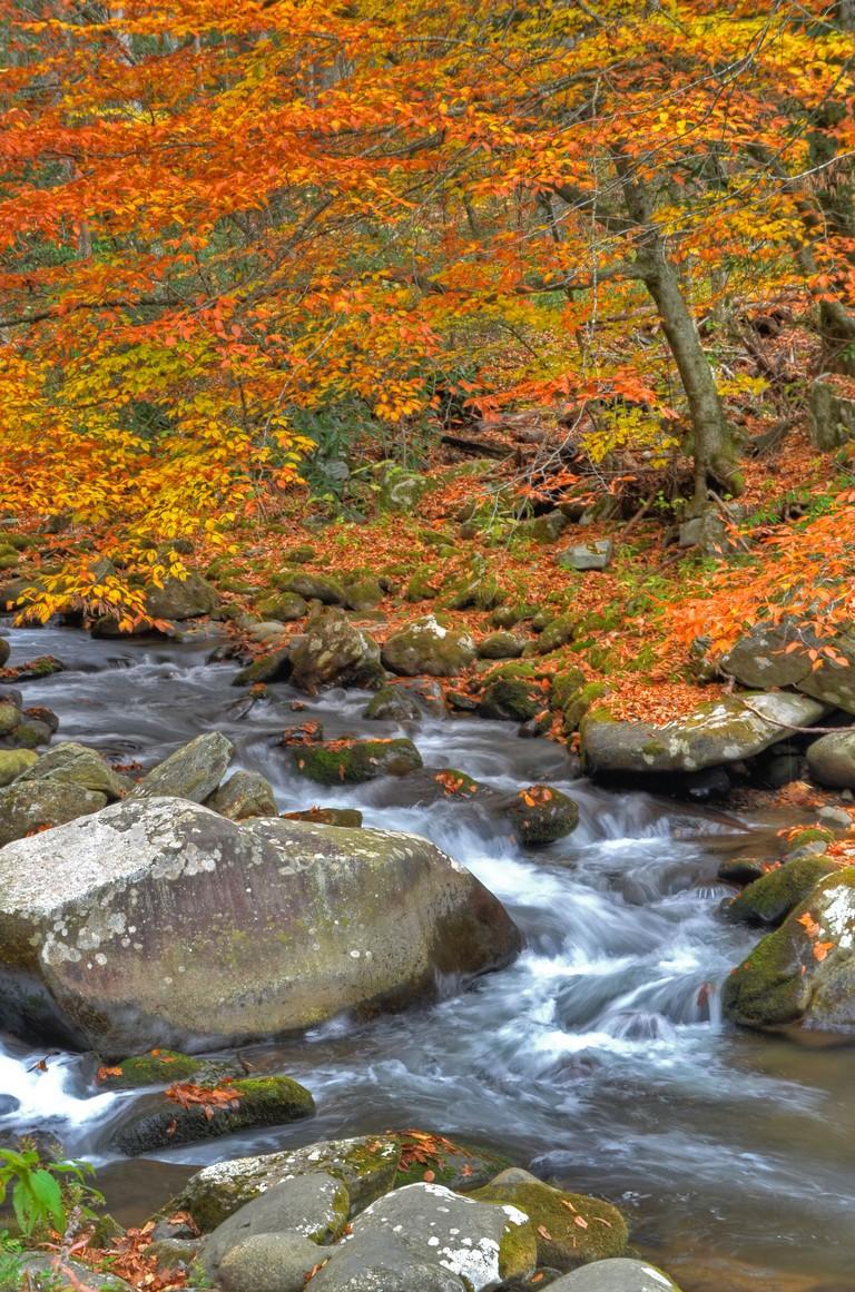 Bryson National Park