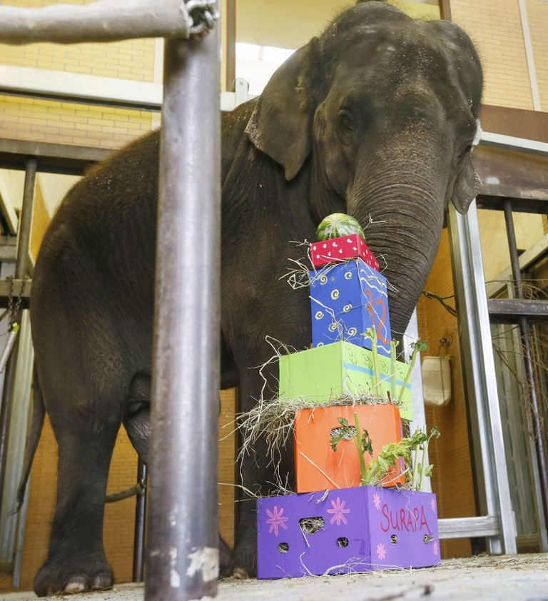 Buffalo Zoo Birthday Party