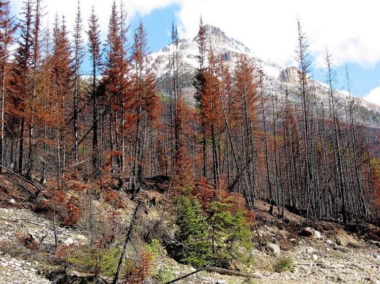 Calgary To Jasper National Park
