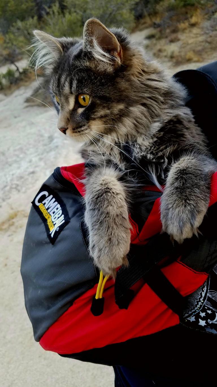 Cat Hiking Backpack