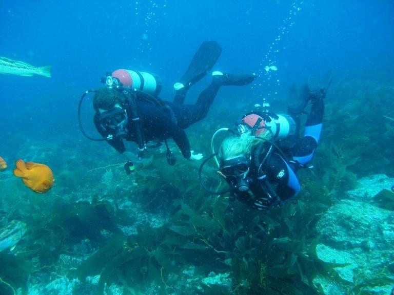 Catalina Island Scuba Diving