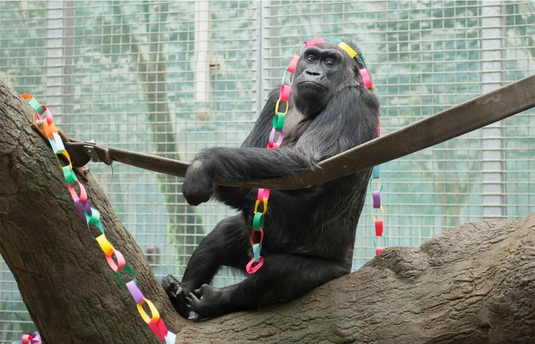 Columbus Zoo Birthday Party
