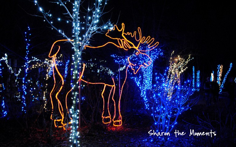 Columbus Zoo Lights Hours