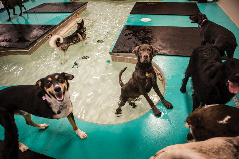 Cottonwood Pet Resort
