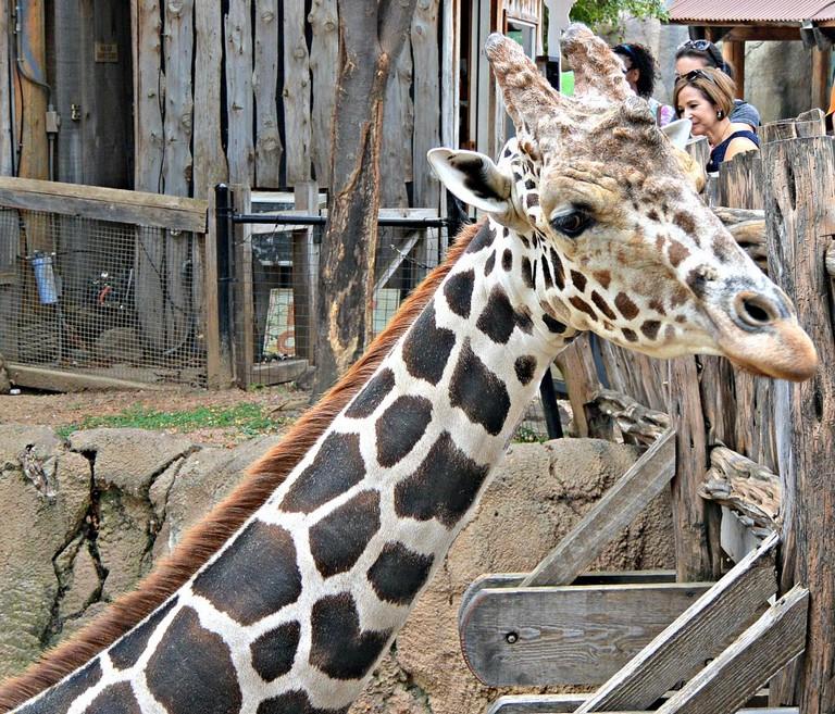 Dallas Zoo Directions