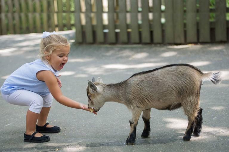 Deer Park Petting Zoo