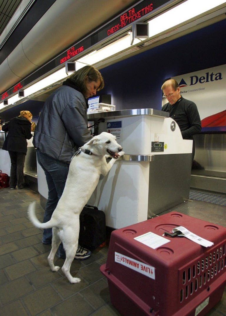 Delta Airlines Pet Travel