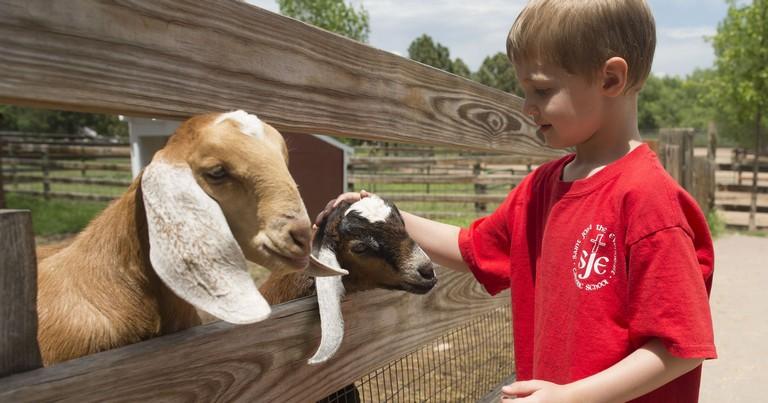 Denver Zoo Summer Camp