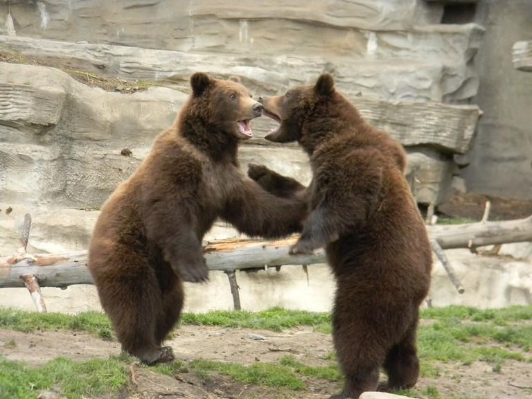 Detroit Zoo Careers