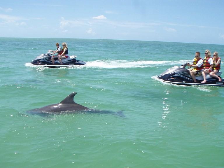 Dolphin Tours Destin Florida