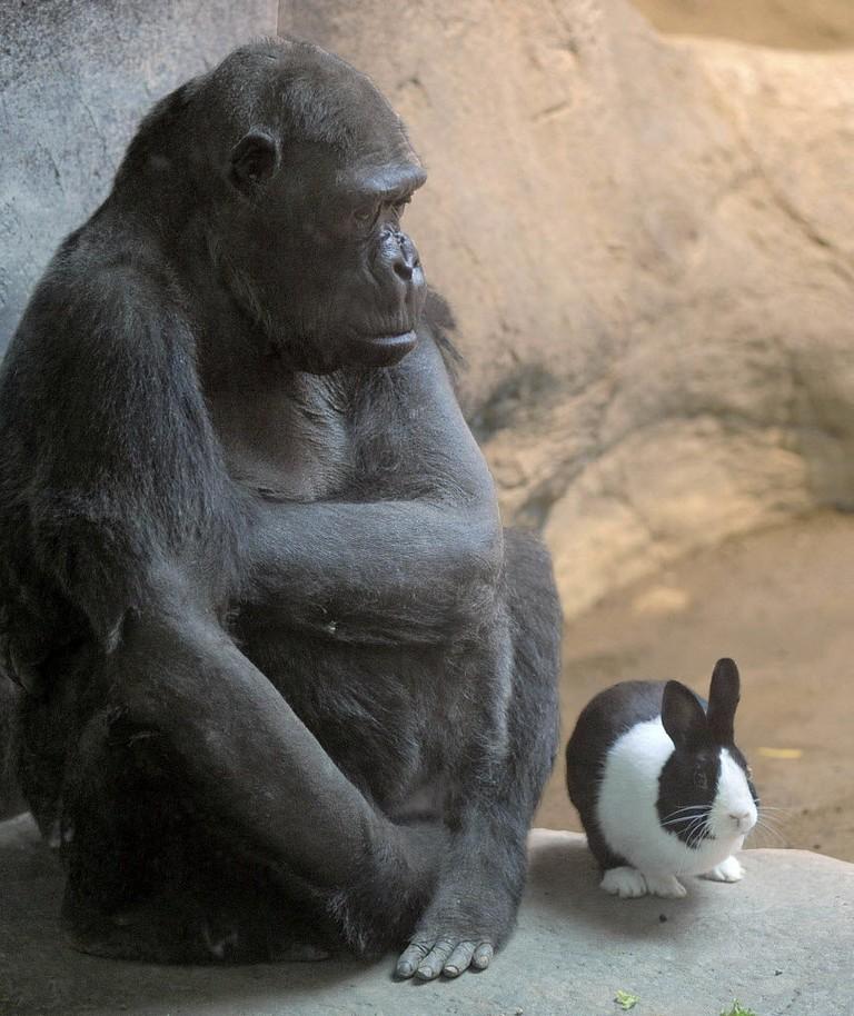Erie Pa Zoo