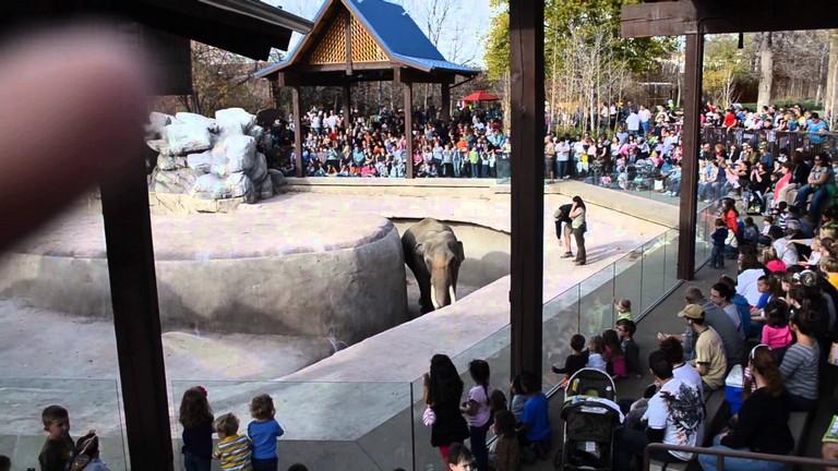 Free Denver Zoo Days