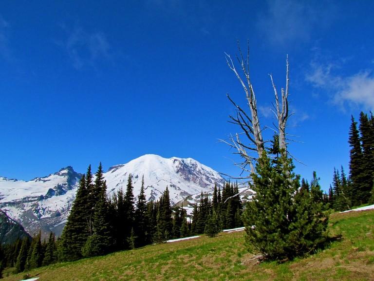 Hotels Near Mt Rainier National Park