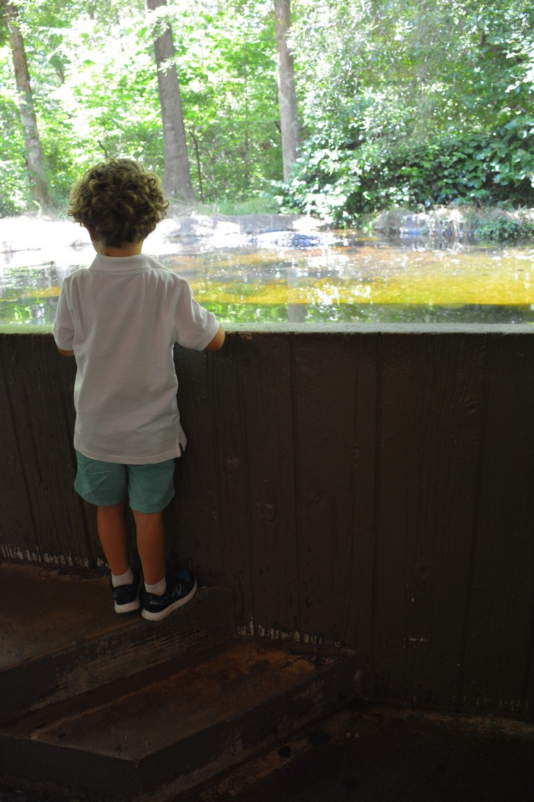 Hotels Near North Carolina Zoo