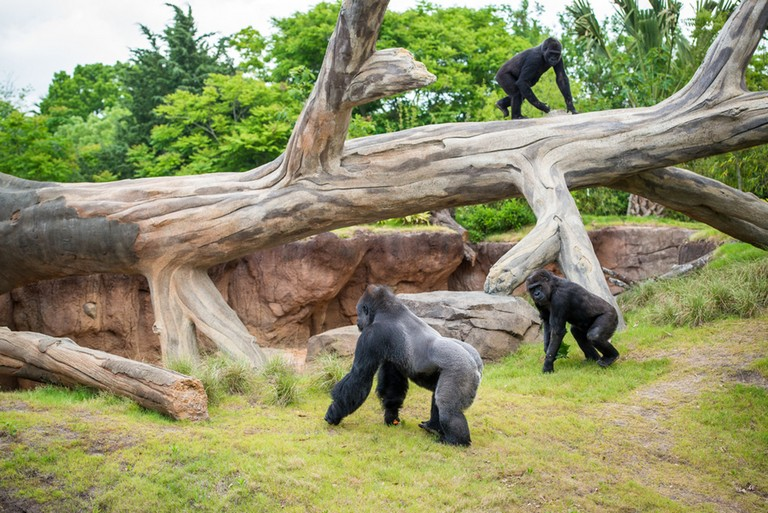 Houston Zoo Directions