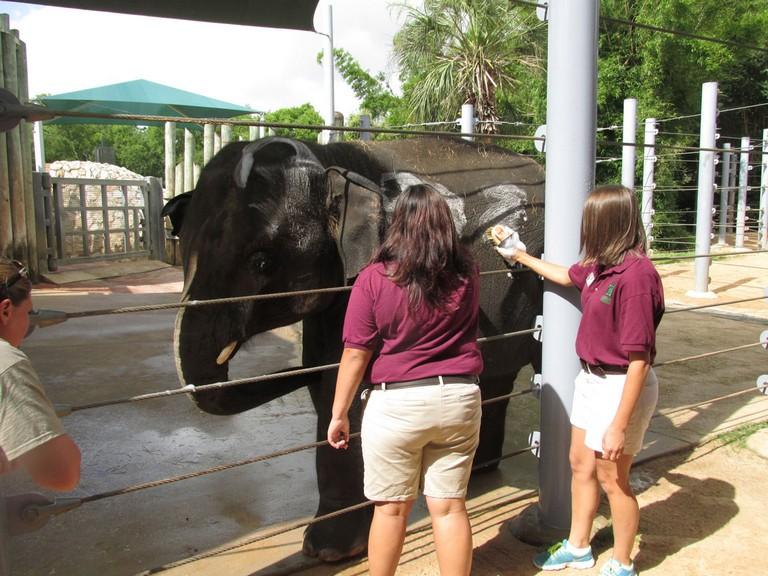 Houston Zoo Internship