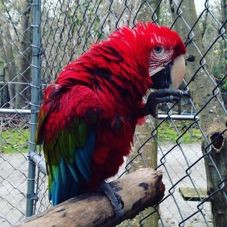 Jacksonville Nc Zoo