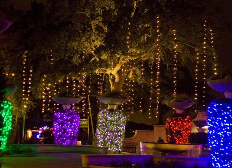 Jacksonville Zoo Lights