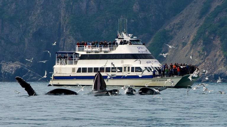 Kenai Fjords National Park Tours