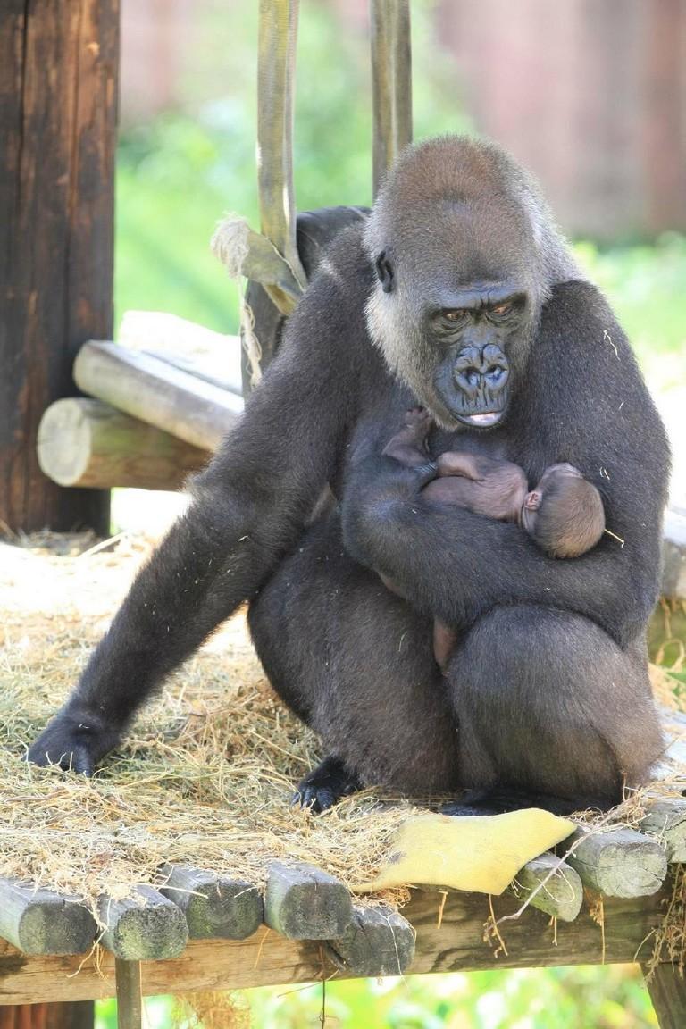 Little Rock Zoo Hours