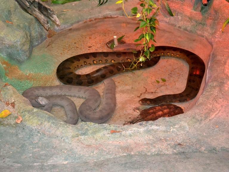 Lufkin Zoo Hours