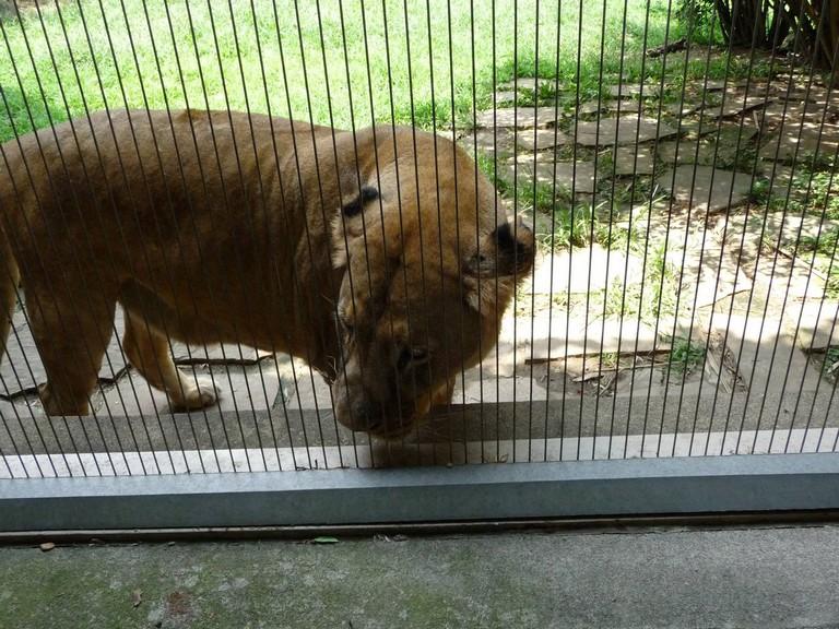 Memphis Zoo Number