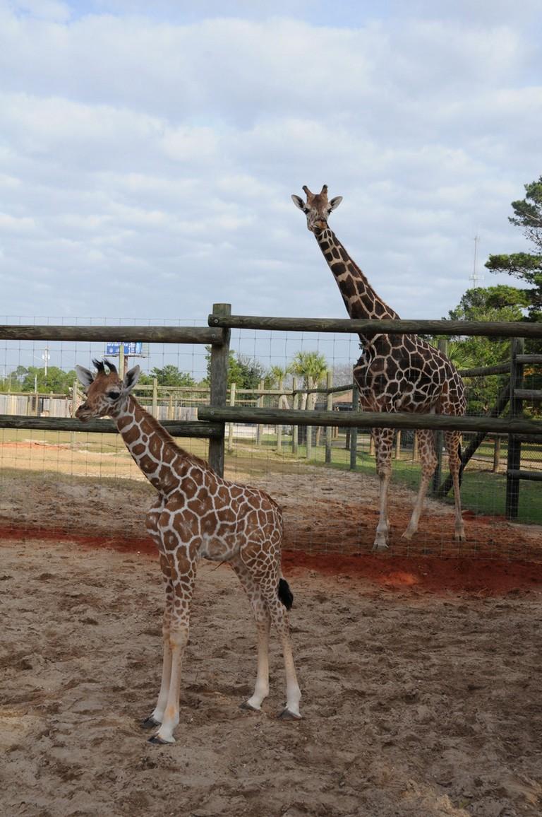 Navarre Zoo