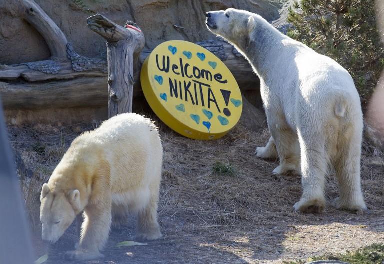 Nc Zoo Ticket Prices