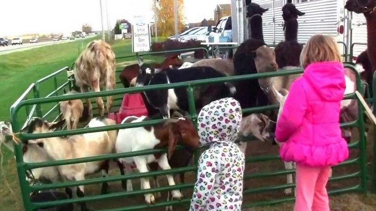Petting Zoo Chicago