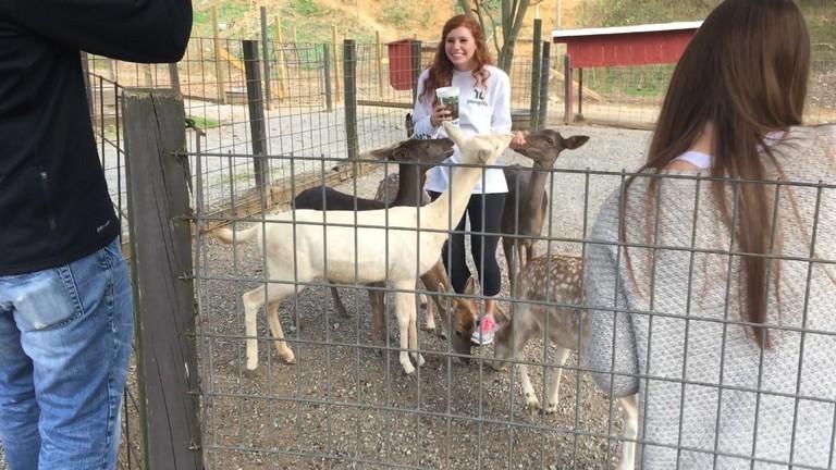 Petting Zoo In Indiana