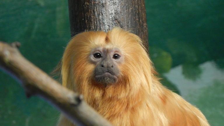 Potawatomi Zoo Prices