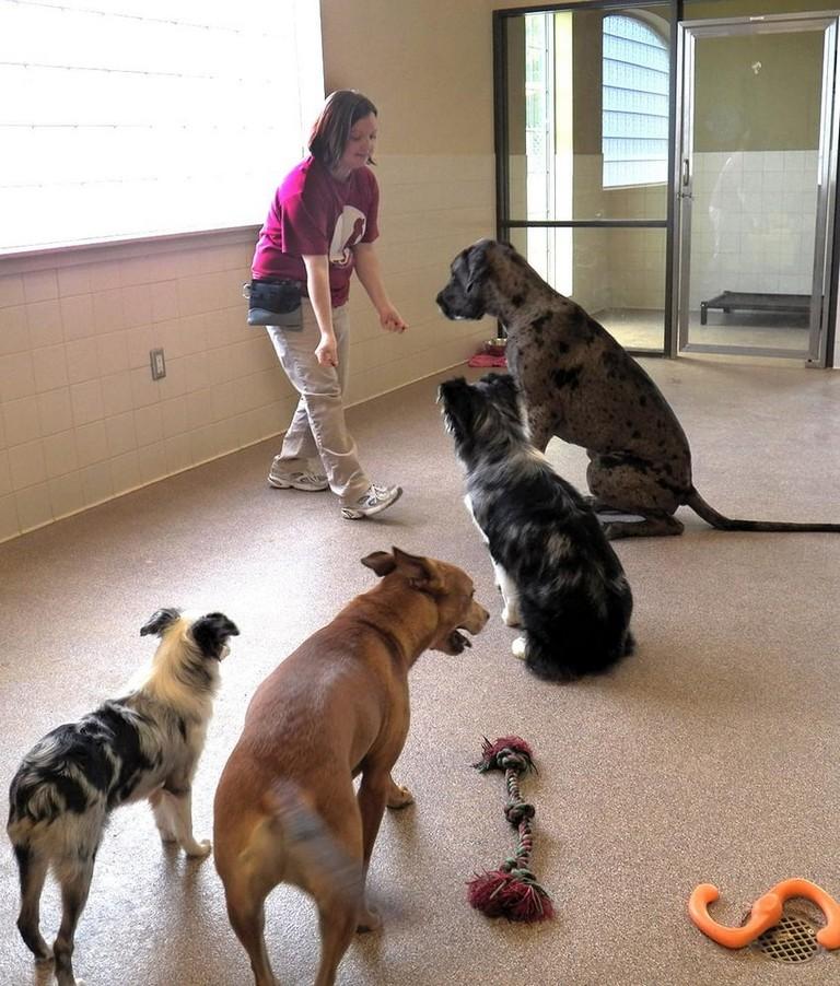 Red Bluff Pet Resort