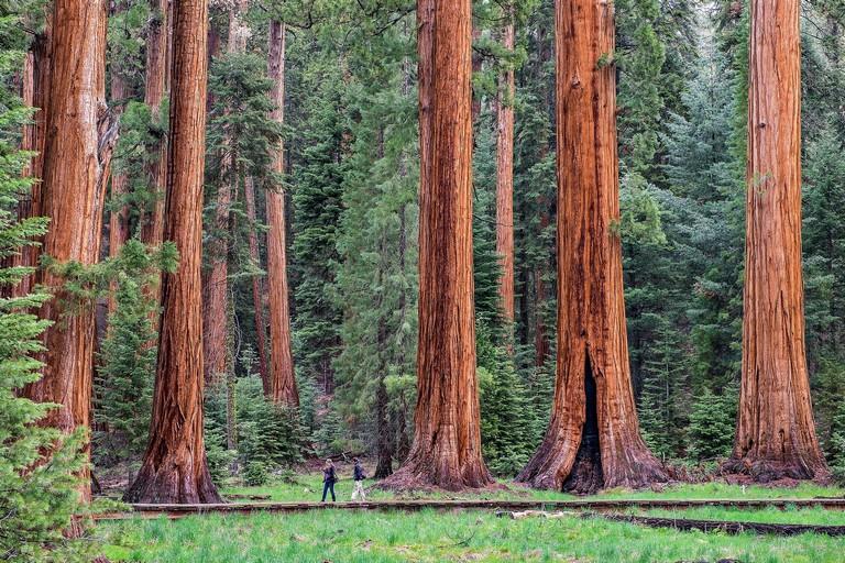 Resorts Near Sequoia National Park