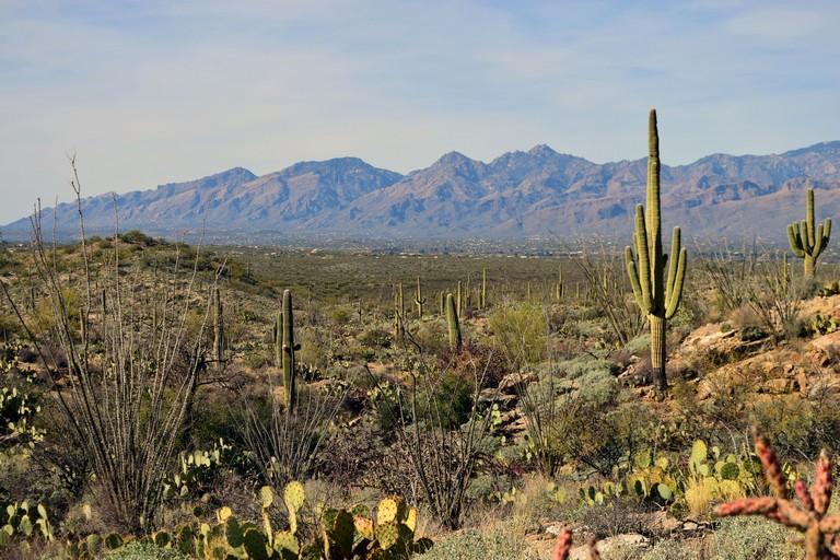 Saguaro National Park Camping