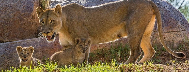 San Diego Zoo Camp