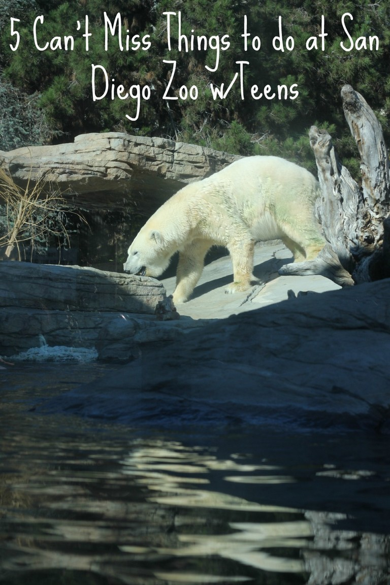 San Diego Zoo Internships