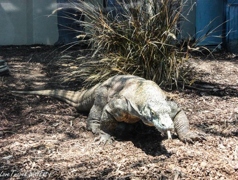 San Diego Zoo Vs Safari