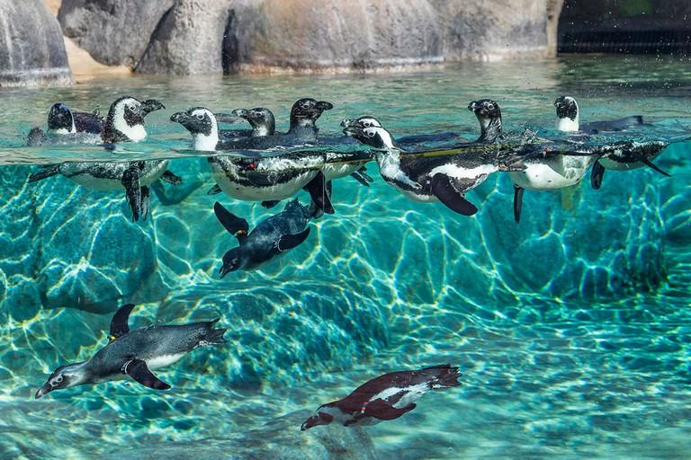 San Diego Zoo Webcam