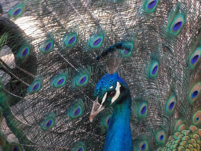 Sandiago Zoo