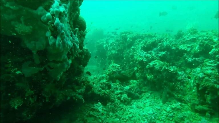 Scuba Diving Destin Florida